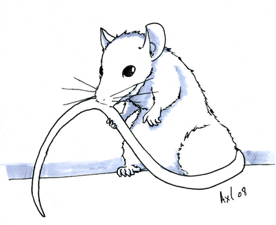 Comment dessiner un rat - Dessin d un rat ...